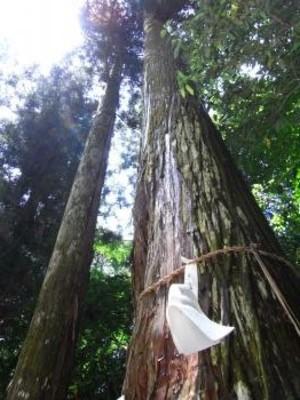 2009toyotamahime_tree_2