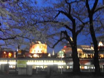 Rimg0013yoko_sakura