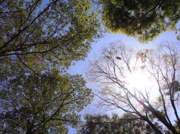 2010fuchumori
