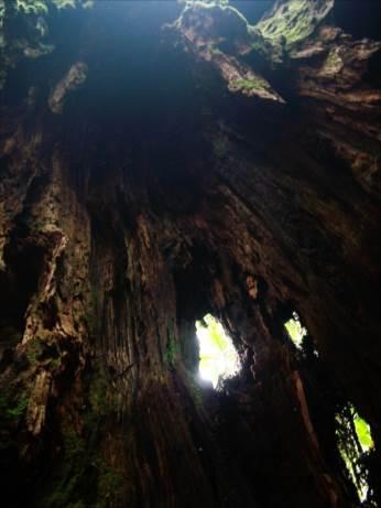 Tree of Heart for you 杉原梨江子公式ブログ 聖なる樹の言の葉たち